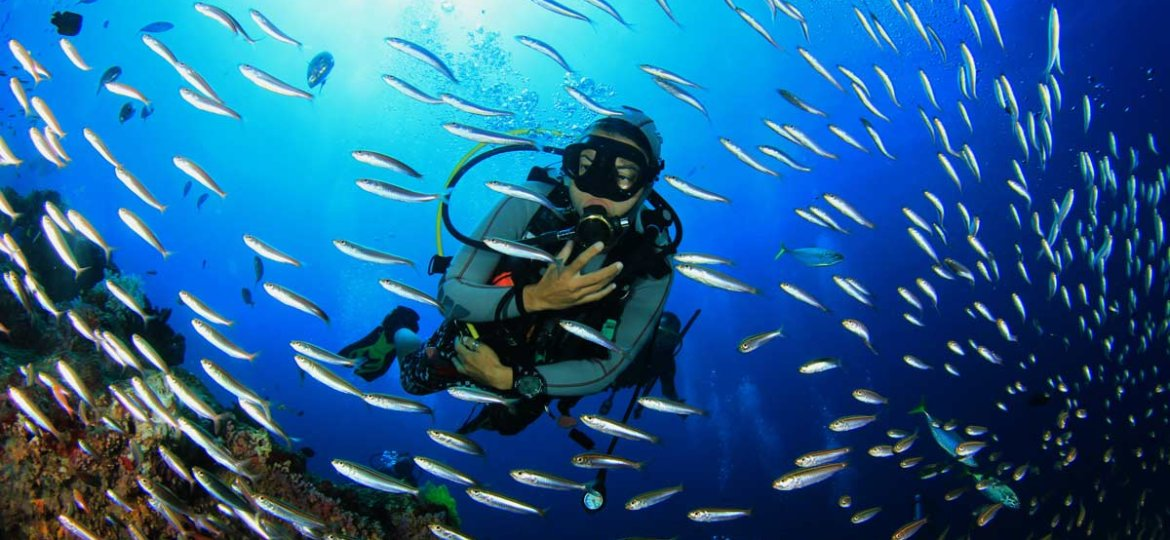 nothern-red-sea-Red-Sea-Diver-Fish