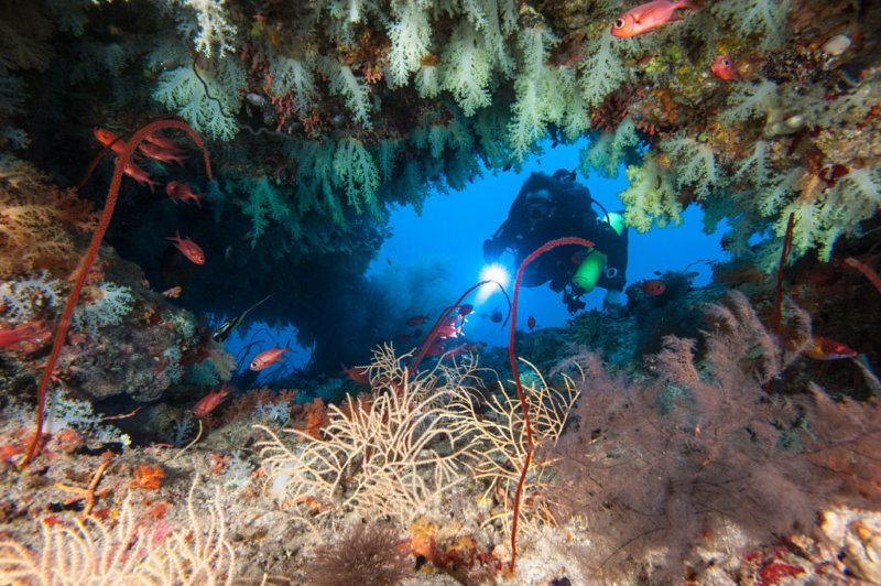 Maldives Diver surrounded by coral