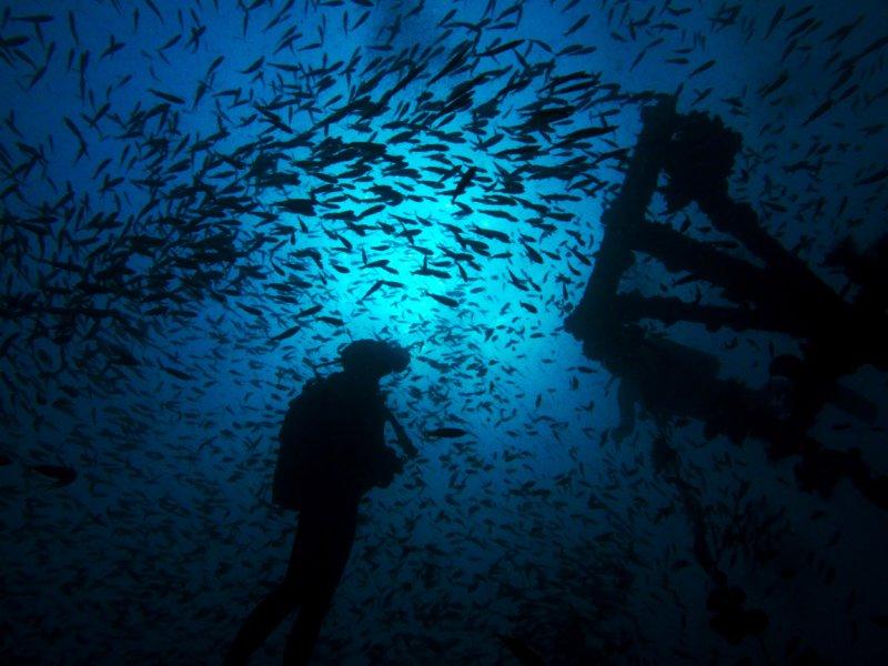 Sakatia diver and fish