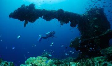 diver explores coral in Truk Lagoon Micronesia