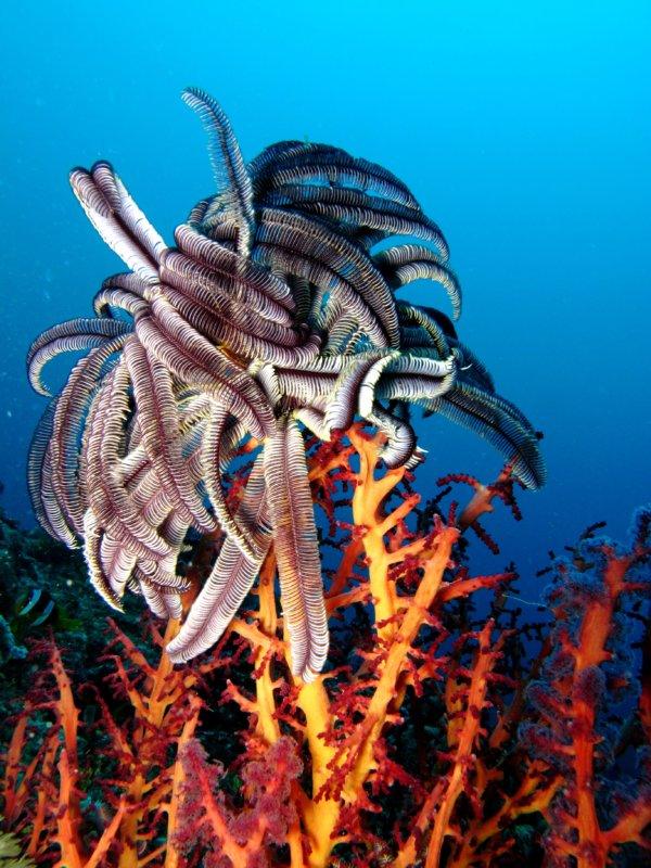 Sakatia diving