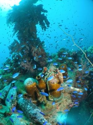Coral Truk Micronesia