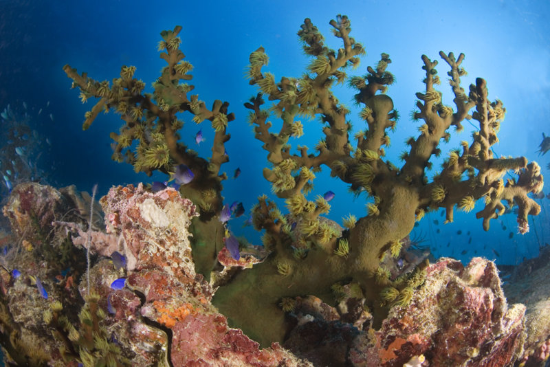 Truk Micronesia Soft Corals