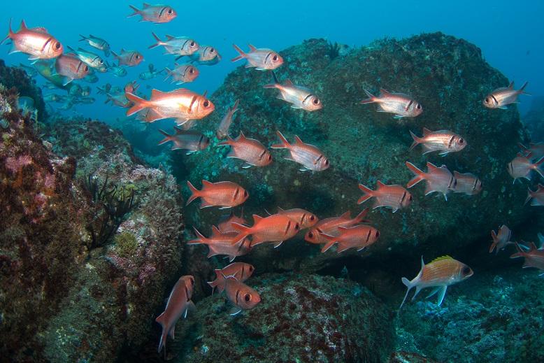 St Helena fish